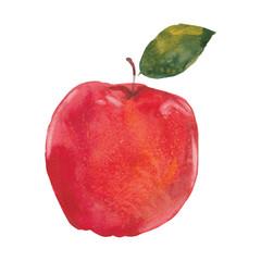 watercolor apple