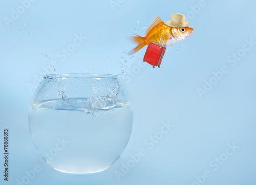 goldfisch springt aus glas stockfotos und lizenzfreie. Black Bedroom Furniture Sets. Home Design Ideas