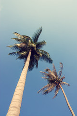 Blue sky through palm trees. Vintage filter