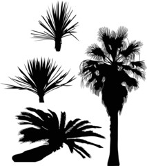 four black  palm trees isolated on white
