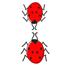 Two ladybugs isolated