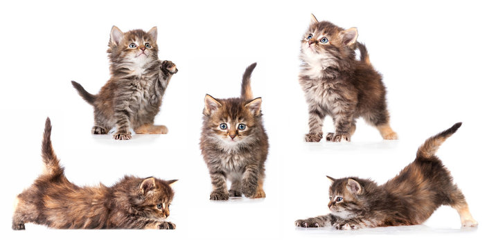 Different pictures of little tabby kitten