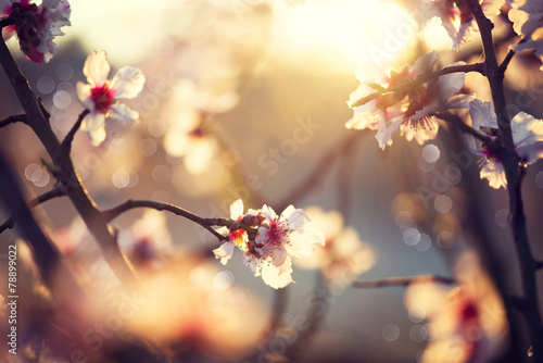 Wall mural Beautiful nature scene with blooming tree and sun flare
