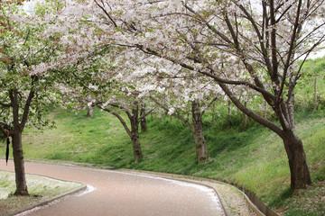 벚꽃이 있는 봄풍경