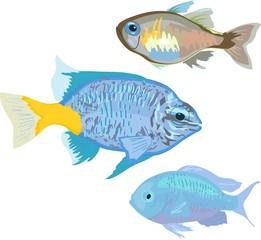 Aquarium marine fishes