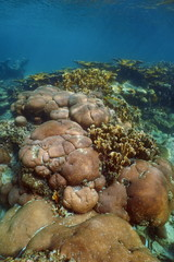 Underwater landscape of stony Caribbean coral reef