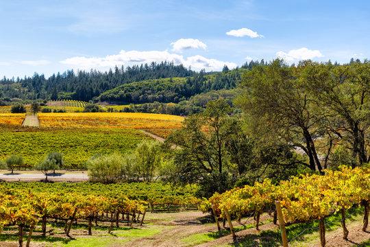 California wine country landscape in autumn