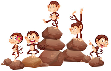 Monkeys and rocks