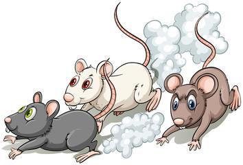 Three rats