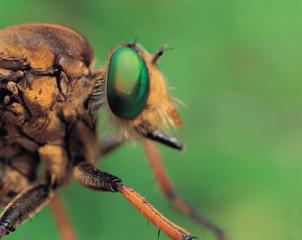 곤충 클로즈업