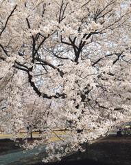 벚꽃과 봄풍경
