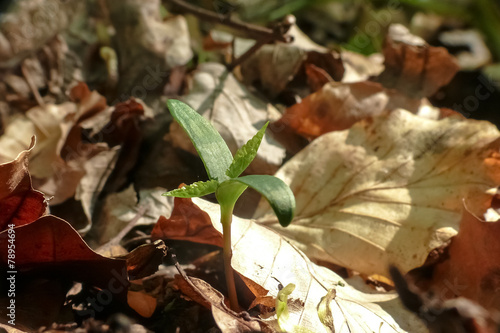 Ahornkeimling Stock Photo And Royalty Free Images On Fotoliacom