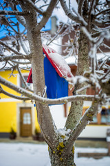 painted blue bird house hanging on tree at snowy day