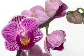 wonderful orchid
