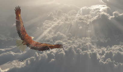 Eagle in flight about the clouds