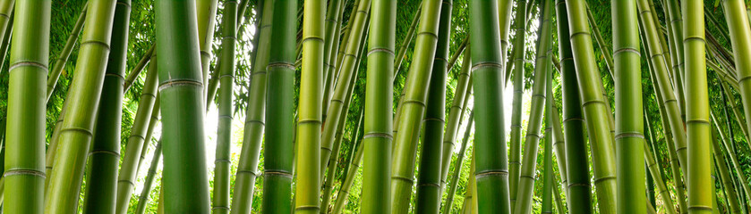 Keuken foto achterwand Bamboo Sunlght peeks through dense bamboo