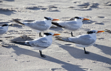 Ocean Bird Family