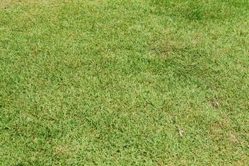 잔디밭이미지