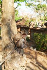 원숭이이미지