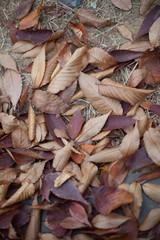 나뭇잎이미지
