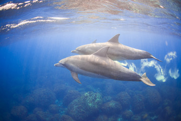 the dolphins living in the island away from Tokyo 3 hours.