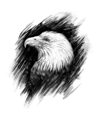 Eagle. Realistic graphic drawing.