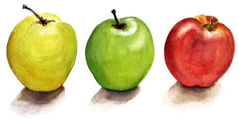 A set of watercolour apples on white background (isolated)