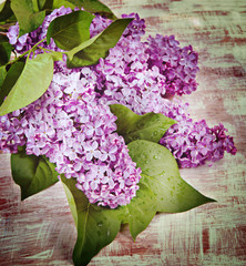 Flowers lilac on the old boards. Vintage retro hipster style ver