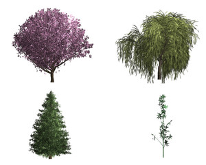 rendering of four different kinds of trees