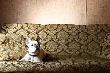Foto op Canvas Marokko Hund