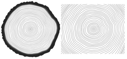 Vector black and white saw cut pine tree trunk and tree rings
