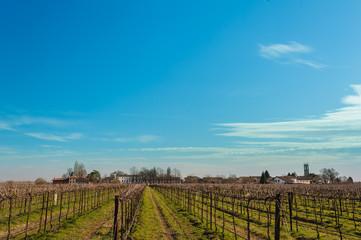 Agricultural Landscape with vineyard