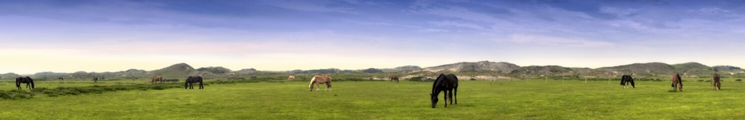Fototapete - Norderney Panorama mit Pferden