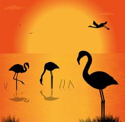 silhouette di fenicotteri sul lago al tramonto