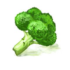 Broccoli vegetable vector illustration  hand drawn  painted