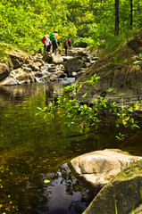 Wild cherry branches and rocks in water at Black river gorge