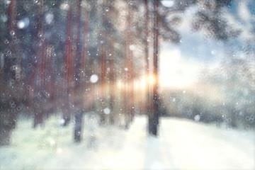 blurred background forest snow winter