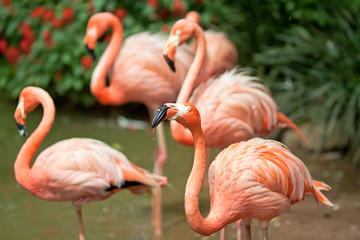 red flamingo