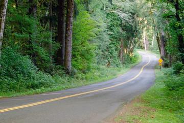 Two Lane Road Cuts Through Dense Tree Canopy Hoh Rainforest