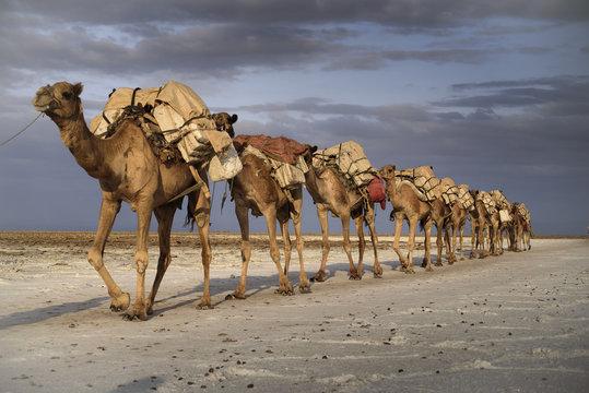 Caravane de sel sur le lac Karoum