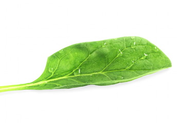 fresh spinach leaf in pure white background