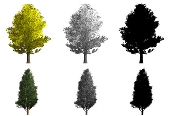 rendering of two different kinds of trees