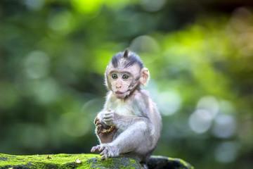 Little baby-monkey