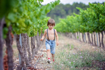Cute laughing boy, running in a beautiful summer vine yard