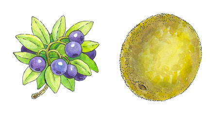 Watercolor painting of a set of fruit: blueberries and kiwi