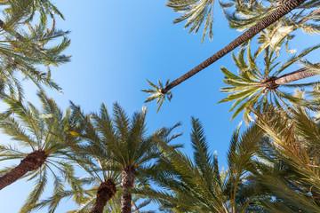 Palmengarten in Elche, Spanien, UNESCO Weltkulturerbe