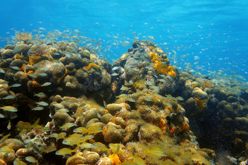 Underwater coral reef with shoal of fish in Panama