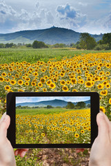 tourist taking photo of sunflower fields in Alsace