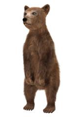 Little Brown Bear