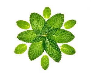 Twelve Mint Leaves in Pattern on White Background